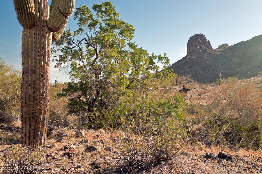 Arizona Photograph - Cactus Cowboys by Cinnamon Sky Photography