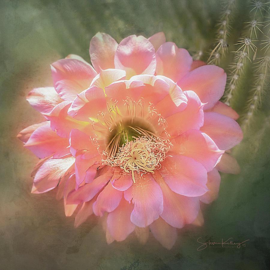 Cactus Flower by Steve Kelley