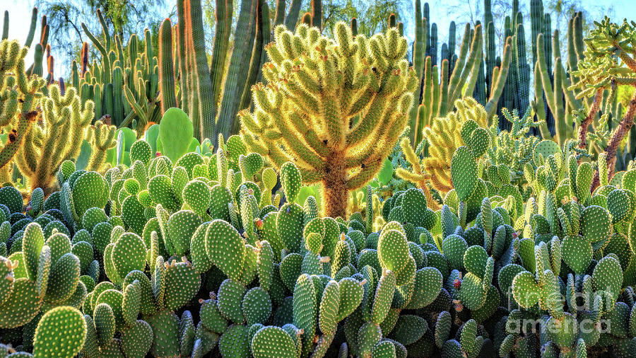 Garden Photograph - Cactus Garden Phoenix Arizona by Edward Fielding