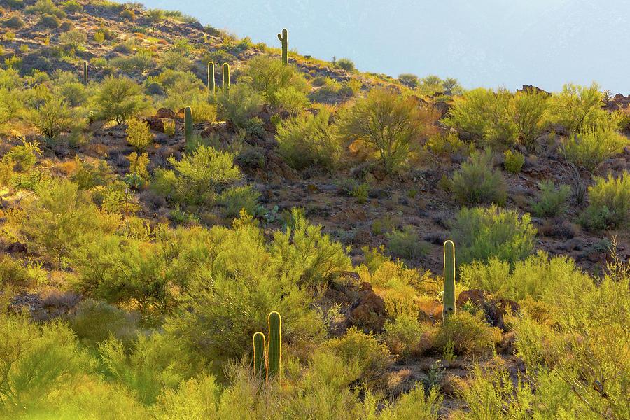 Cactus Halos by SR Green