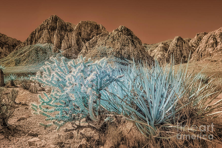 Cactus In Red Rock Canyon #2 Photograph