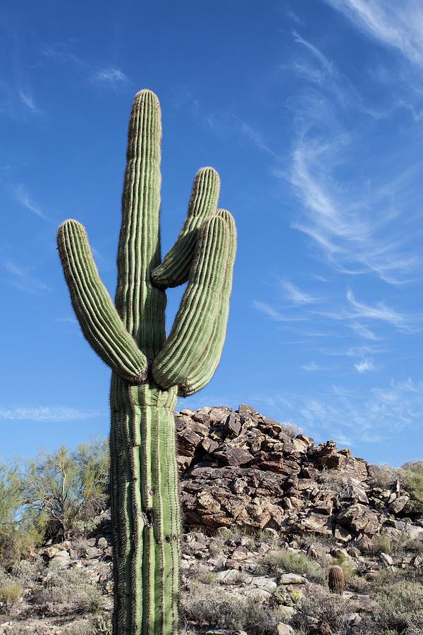Cactus Photograph by Jgareri