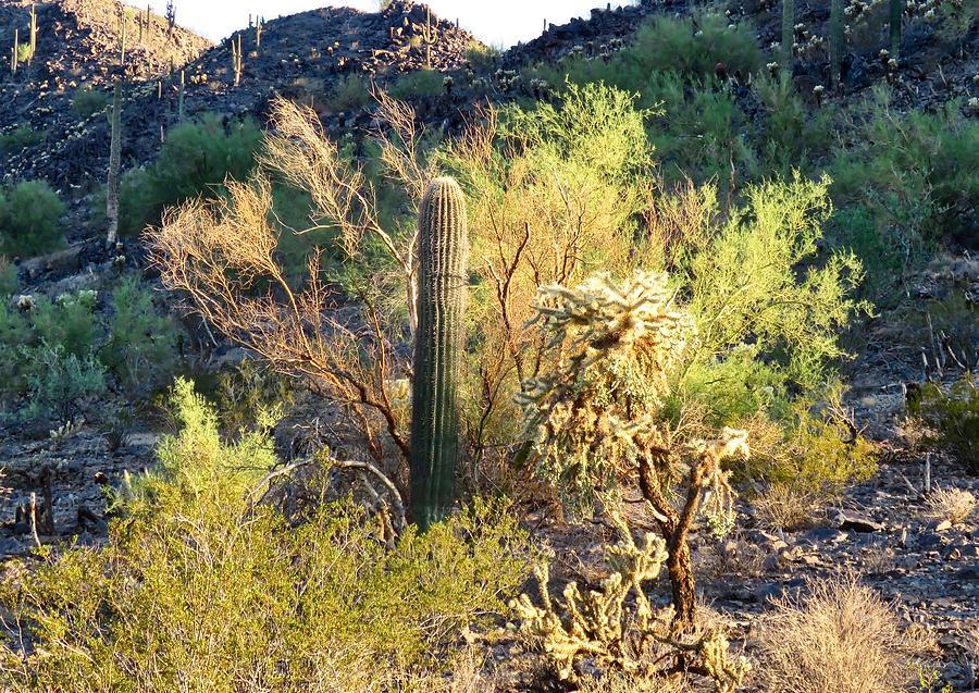Cactus Kingdom by Judy Kennedy