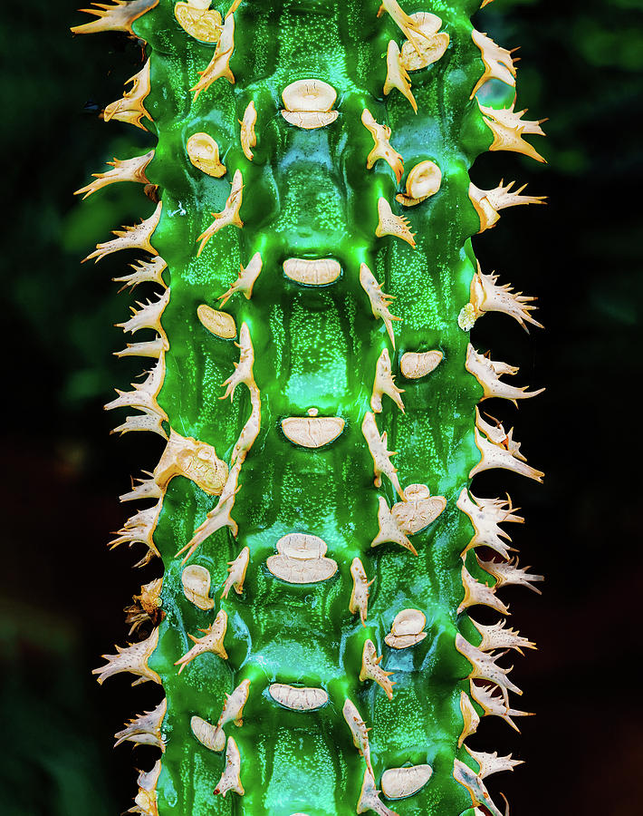 Cactus Ladder by Gary Slawsky
