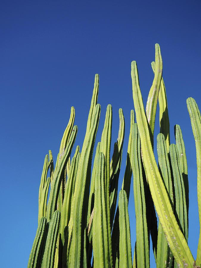 Cactus Photograph - Cactus by Neka