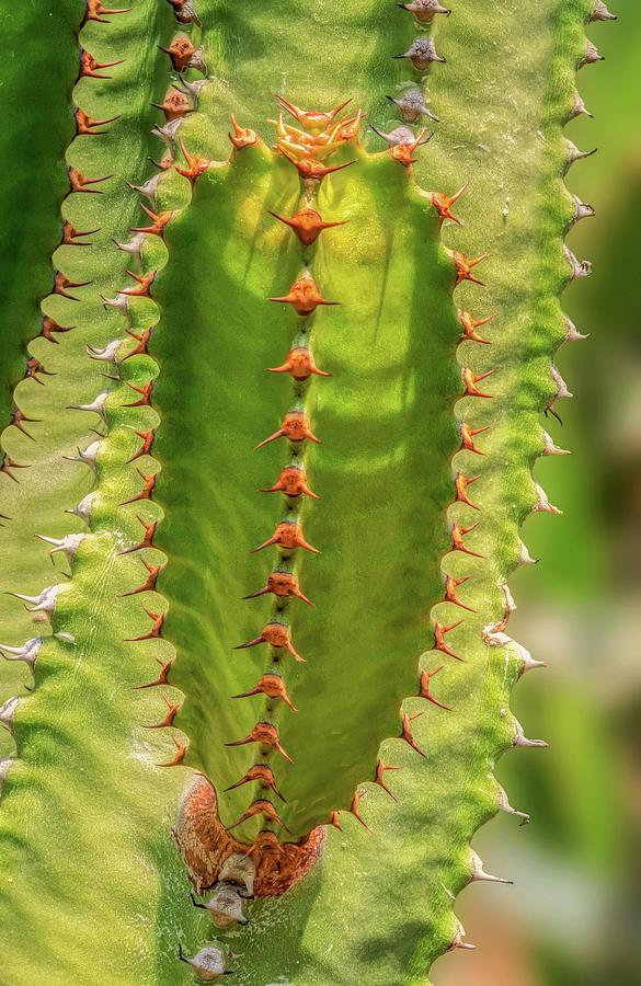 Cactus On Cactus by Gary Slawsky
