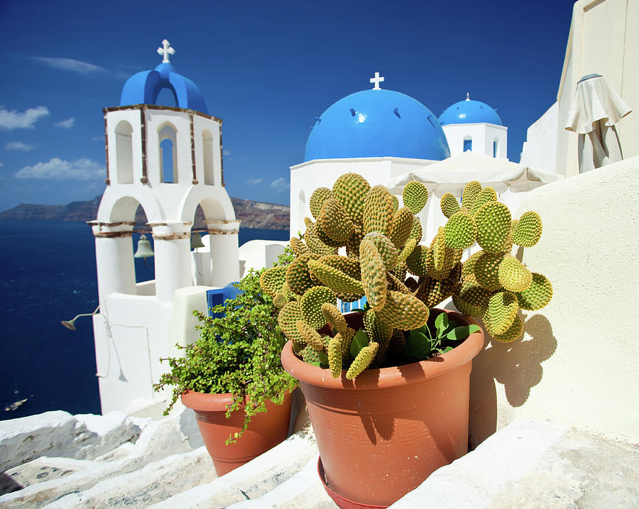 Cactus On Santorini Photograph by Traveler1116