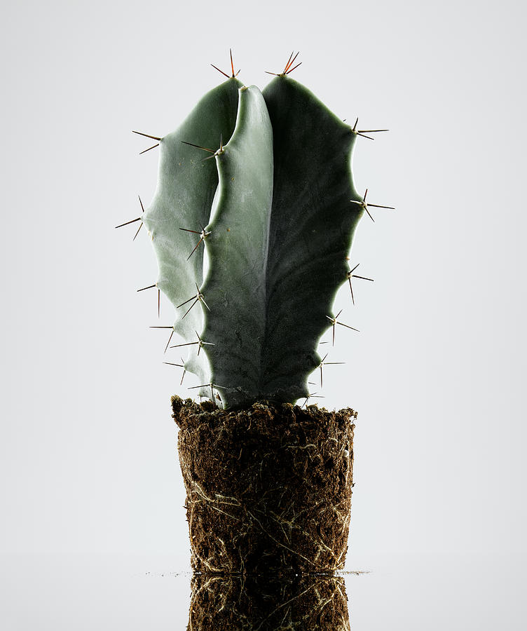 Cactus On White Background Photograph by Chris Stein