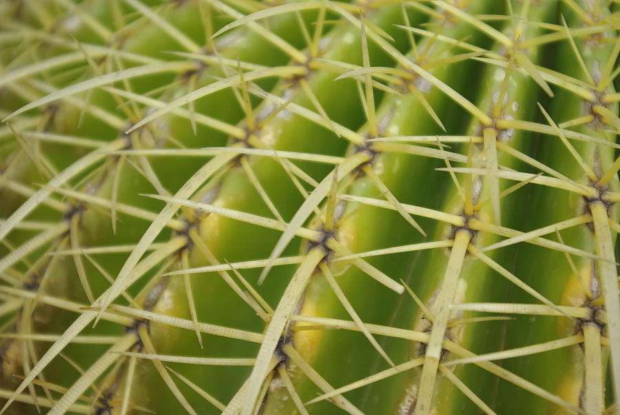 Cactus Photograph by Oscar Martín