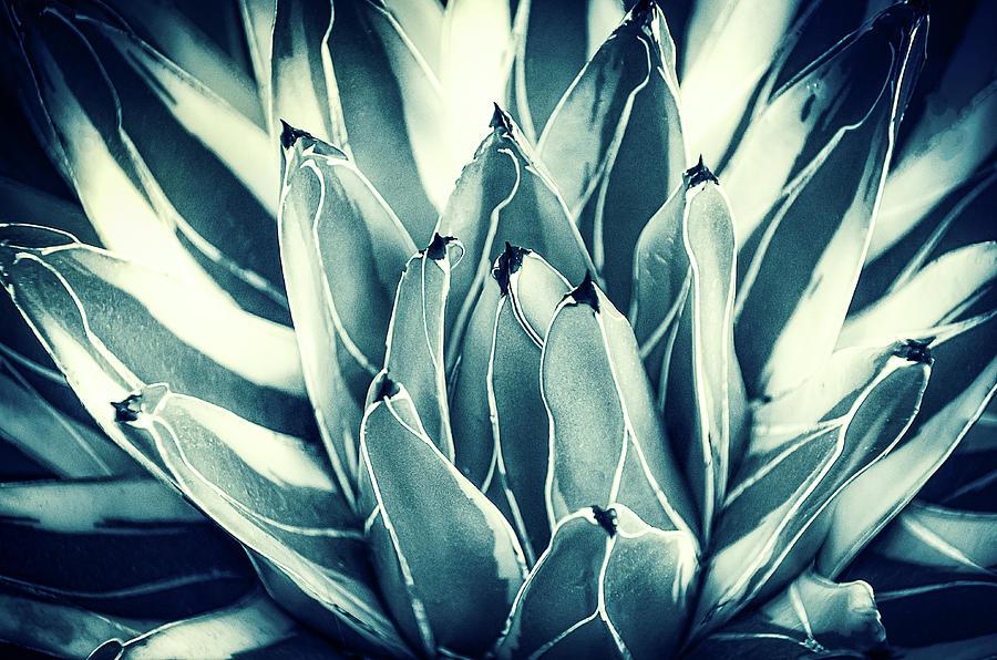 Cactus Plant 2 by Julie Palencia