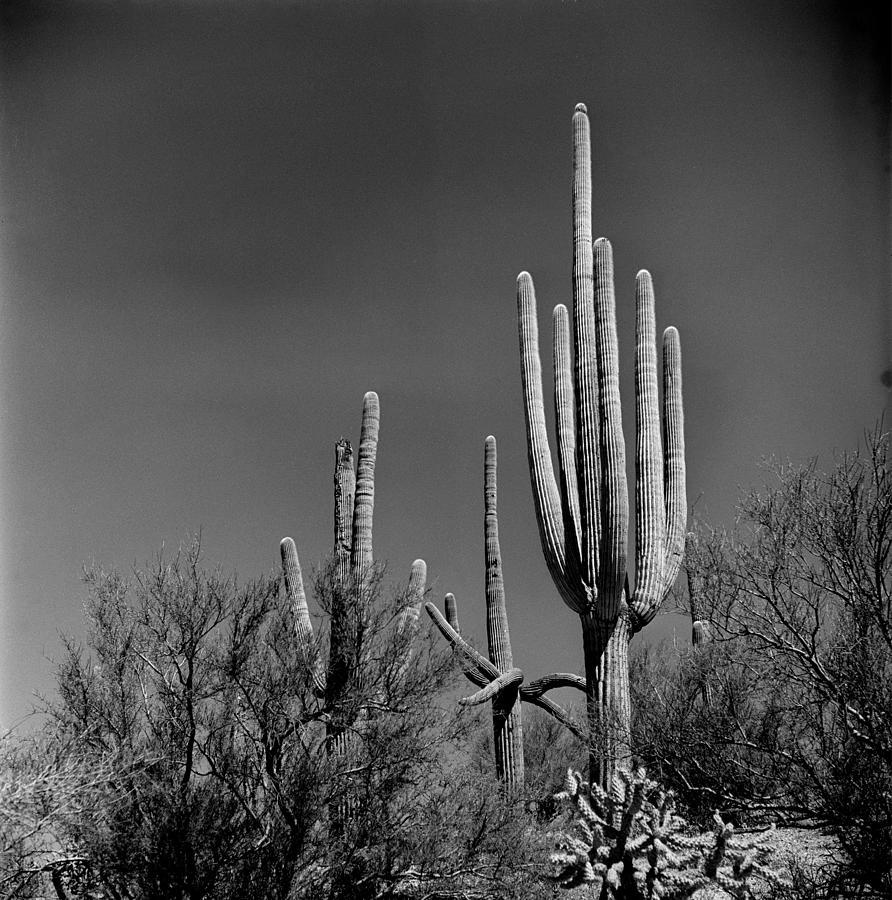 Cactus Photograph by Robert Natkin