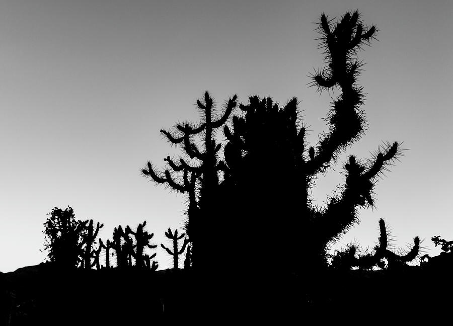 Cactus Silhouettes, Granada, Spain by Venetia Featherstone-Witty