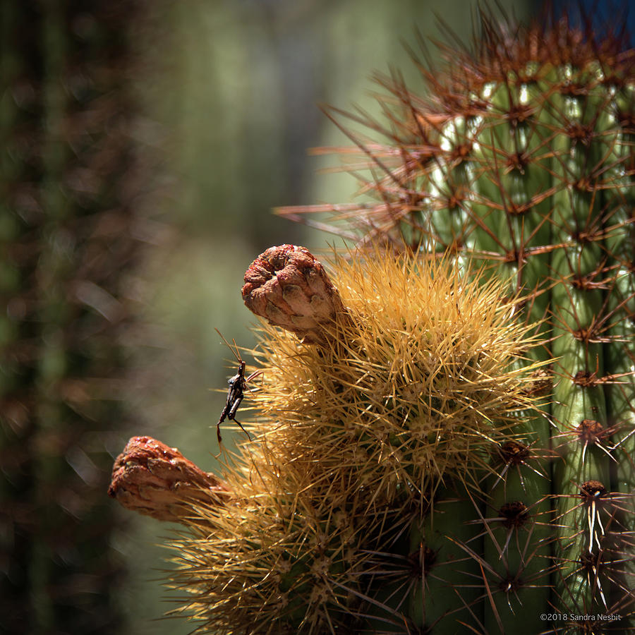 Cactus with Beetle by Sandra Nesbit