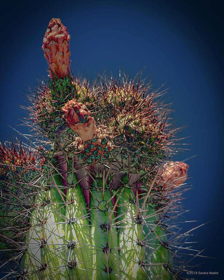 Cactus with Pink Flower by Sandra Nesbit