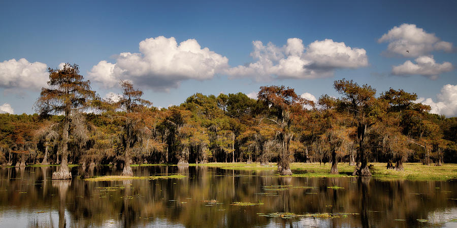 Caddo Backwaters by Lana Trussell
