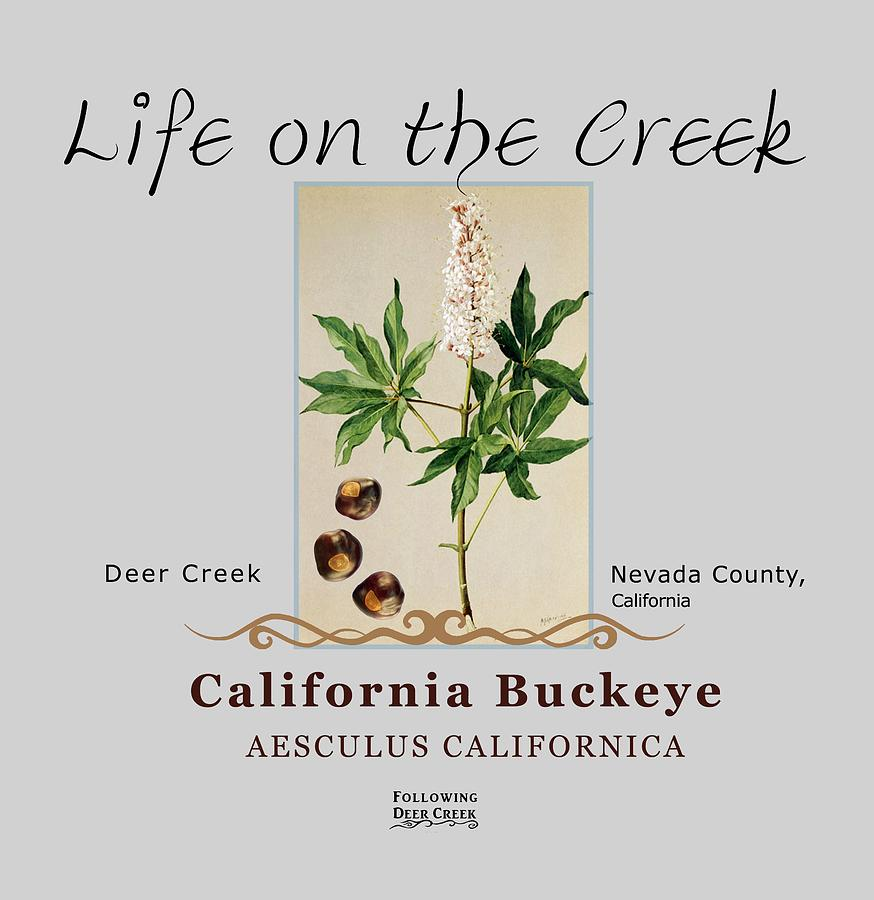 California Buckeye by Lisa Redfern