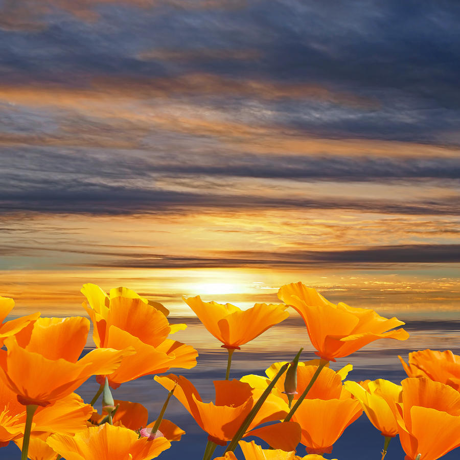 California Dreaming Sunset And Poppies by Gill Billington