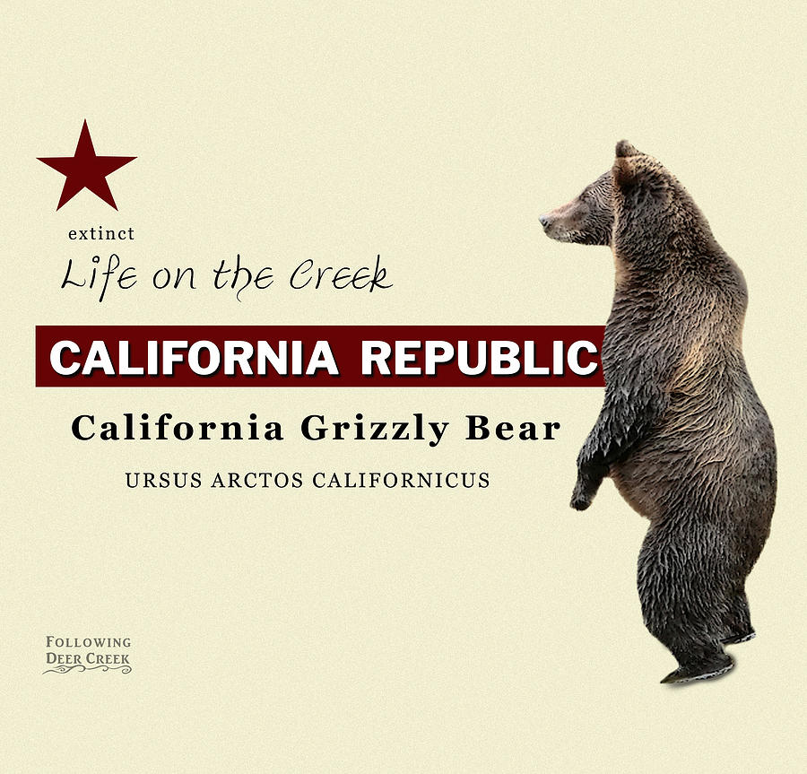 California Grizzly by Lisa Redfern