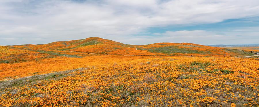 California Poppy Superbloom 2019 - Panorama by Gene Parks
