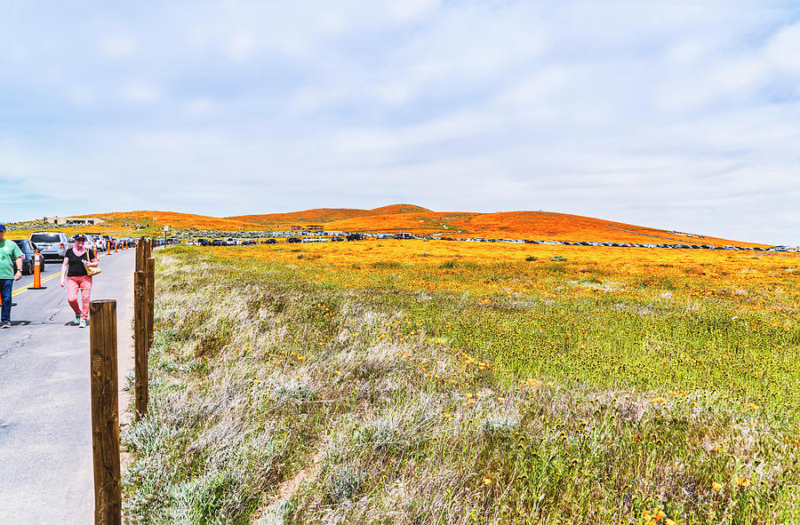 California Poppy Superbloom 2019- Season Ending by Gene Parks
