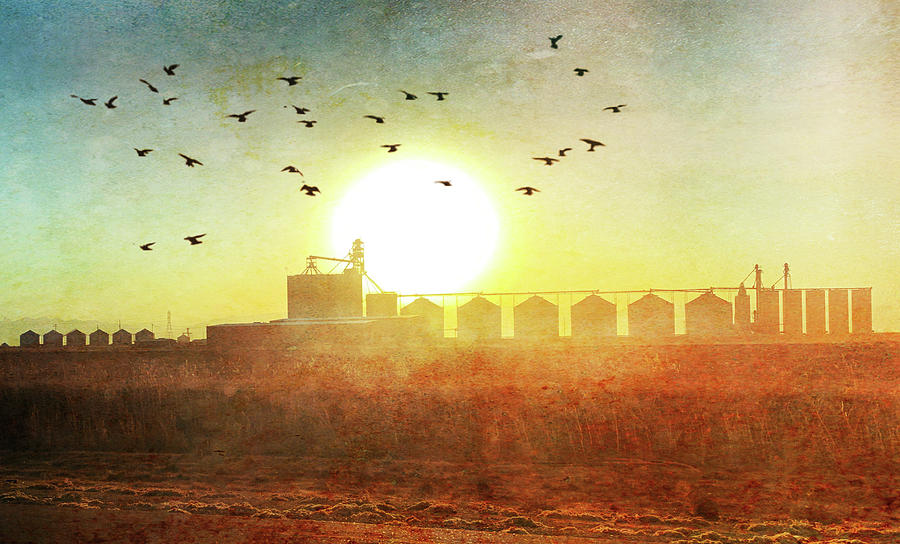 California Rural Sunset Photograph