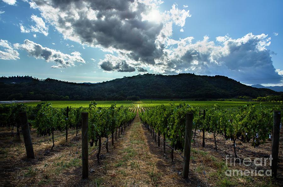 California Vineyard Photograph