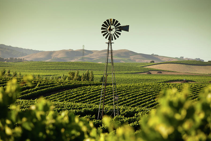 California Wine Country Photograph by Halbergman