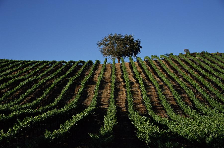 Californias Winegrape Growing Region Of Photograph by George Rose