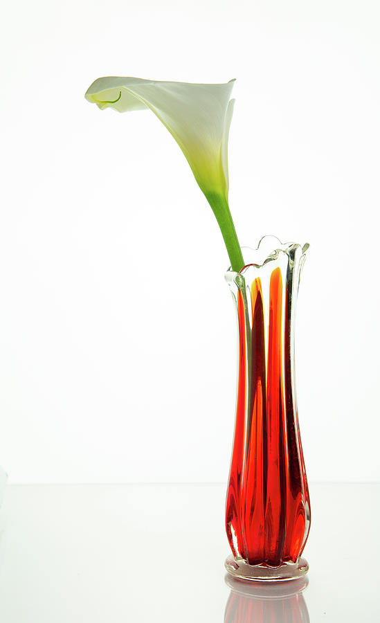 Calla lily flower on a red vase by Michalakis Ppalis