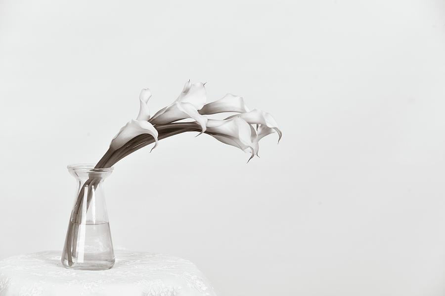 Calla Love by Michelle Wermuth