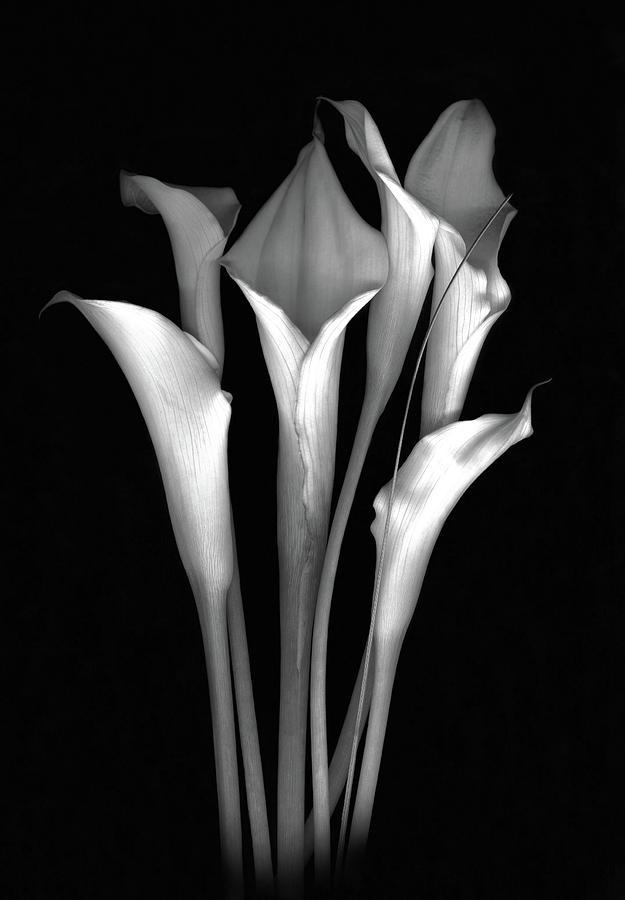 Calla Photograph - Calla White and Black by Sandi F Hutchins