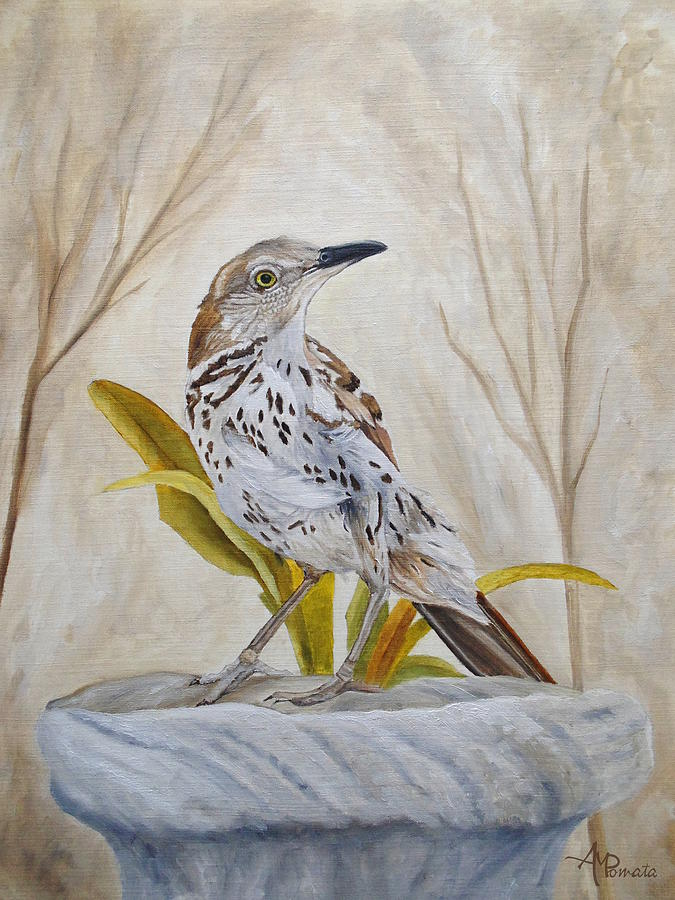 Calm Dawn Brown-thrasher by Angeles M Pomata
