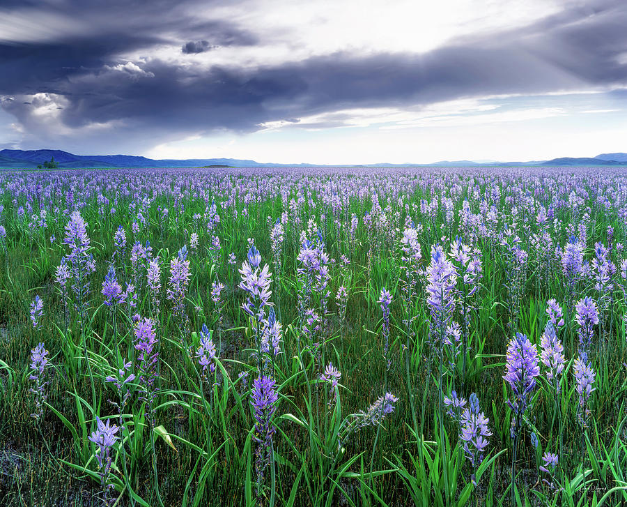 Beautiful Photograph - Camas Marsh 2 by Leland D Howard