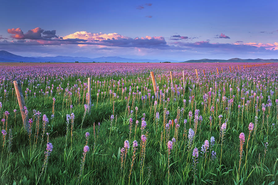 Idaho Photograph - Camas Marsh Spring Sunrise by Leland D Howard