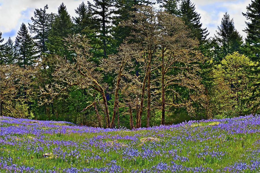 Camas Photograph - Camas Meadow by John Christopher