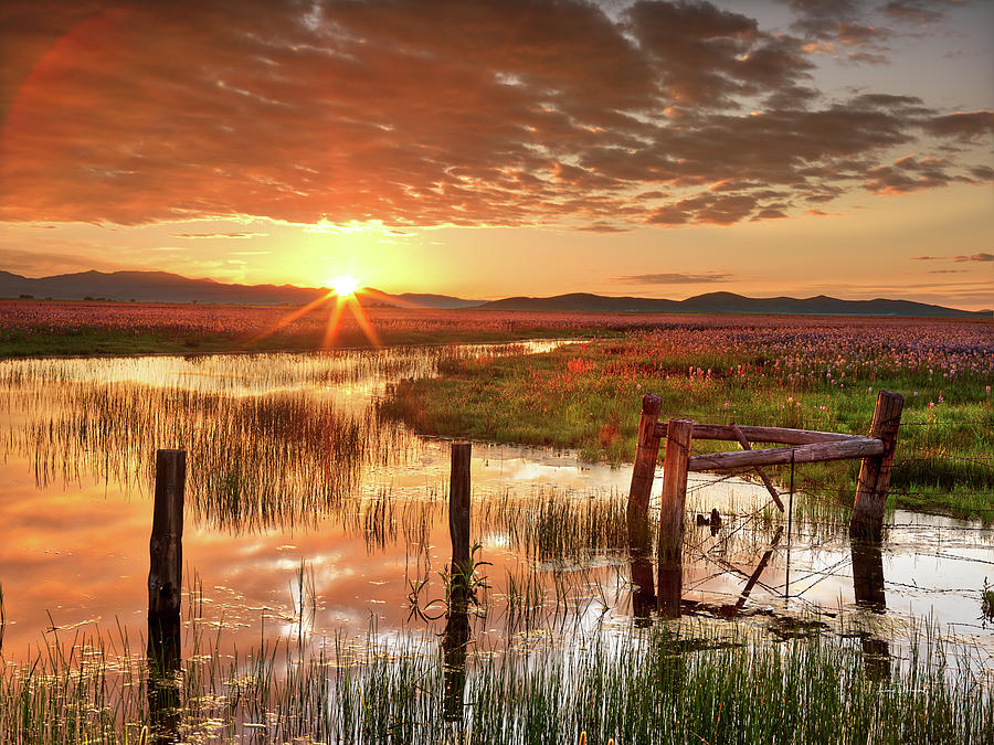 Camas Prairie Brillance by Leland D Howard