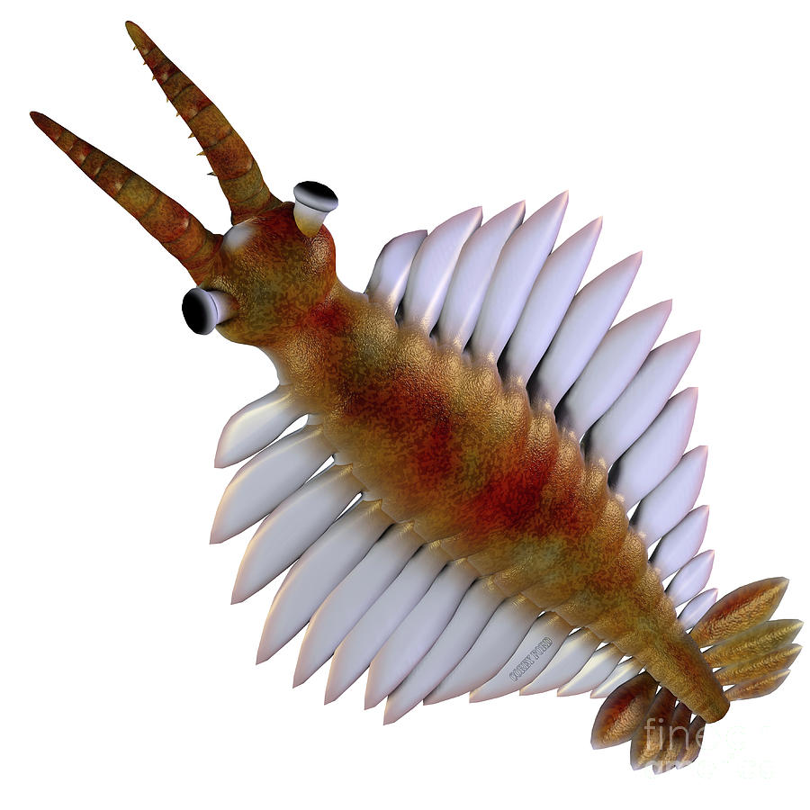 Cambrian Anomalocaris Head by Corey Ford