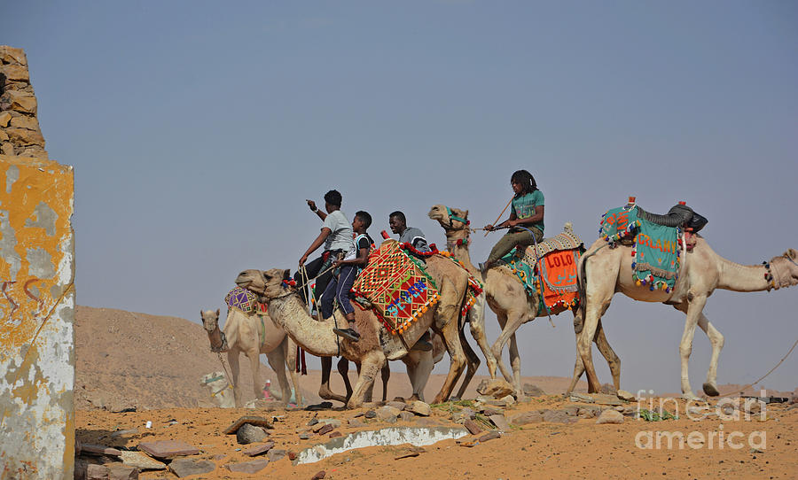 Camel Boys by Andrea Simon