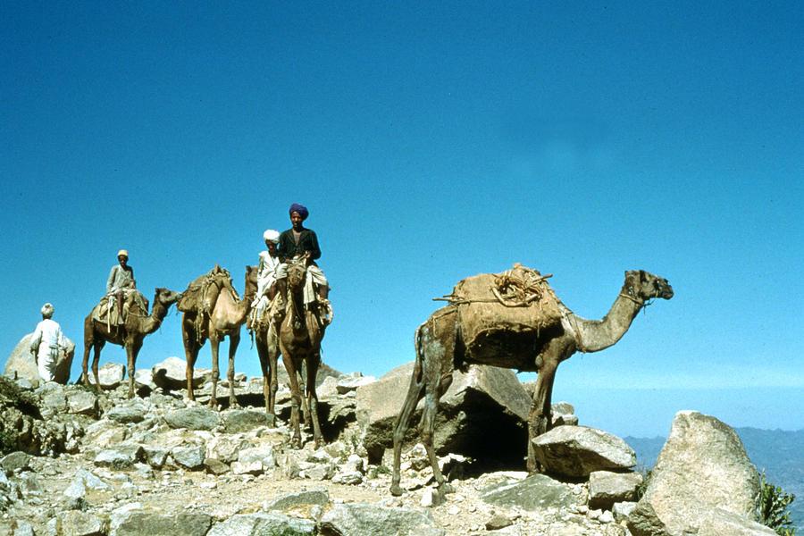 Camel Caravan Photograph by Bert Hardy