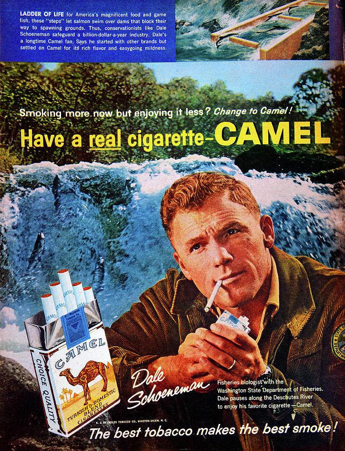 Camel Cigarette Add 1960s