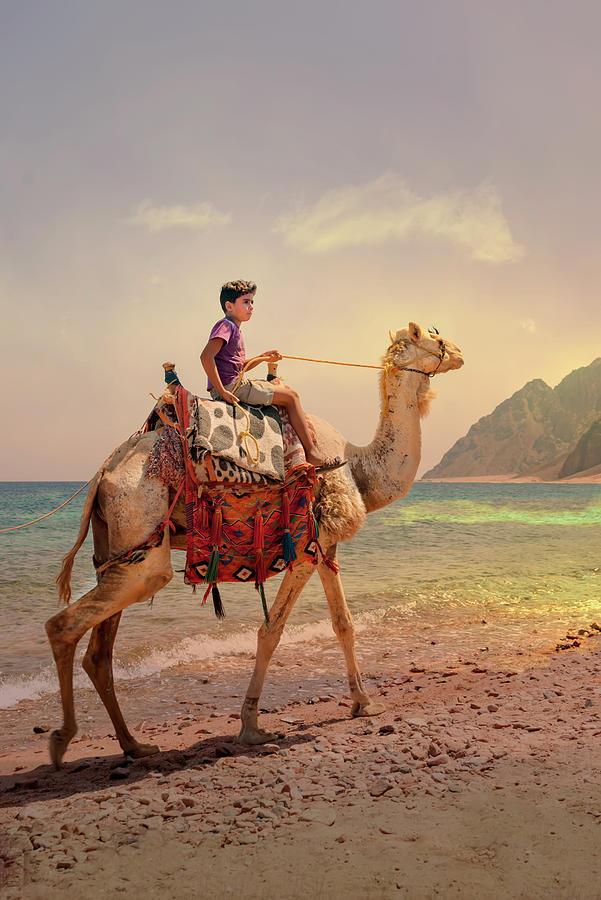 Camel by Gouzel -