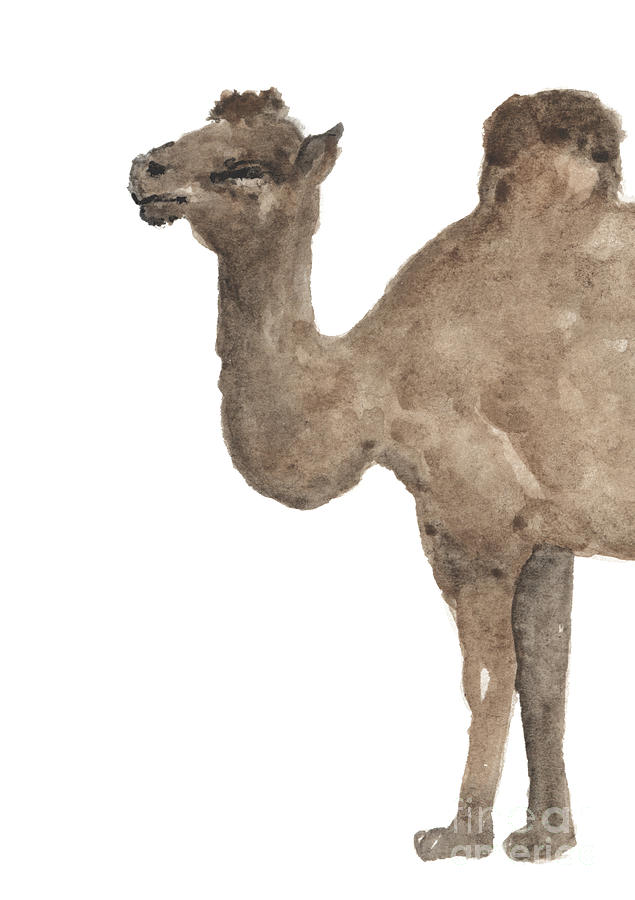 Camel Part One Wall Decor Desert Animals Watercolor Poster