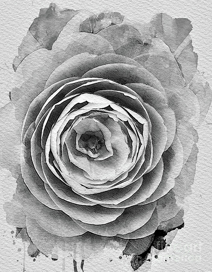 Camelia Black and white by Tracey Lee Cassin