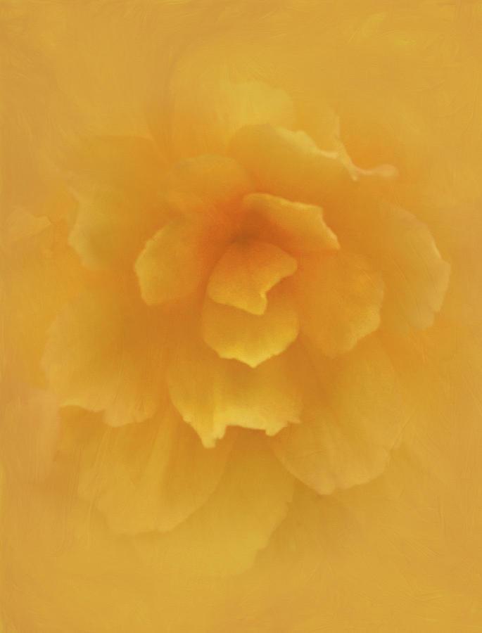 Camellia Begonia by Carol Eade