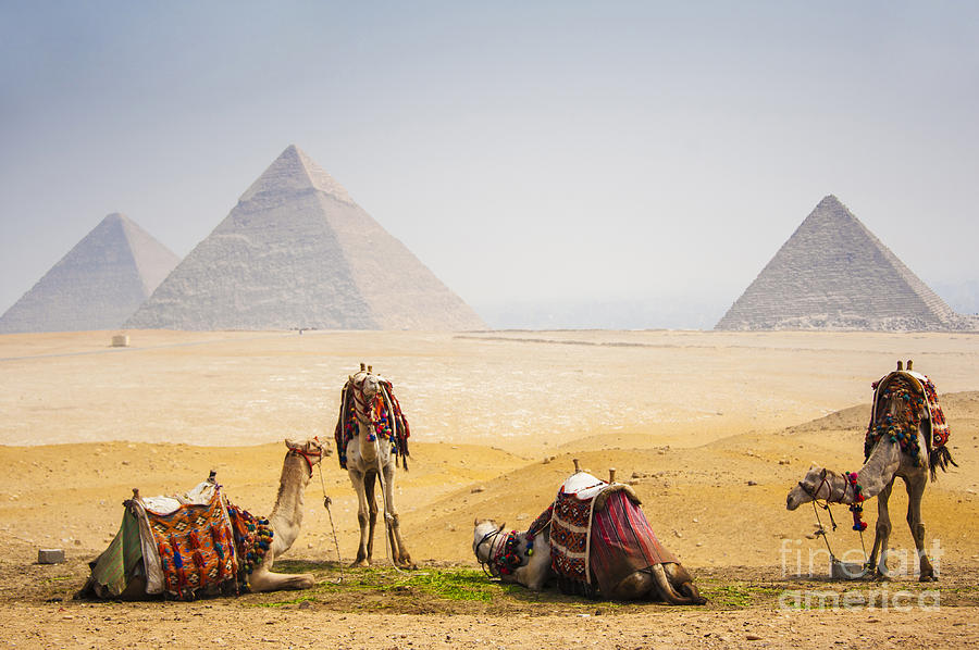 Menkaure Photograph - Camels With Pyramid by Peach018