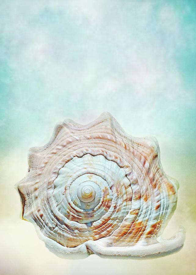 Cameo of the Sea by Kathi Mirto
