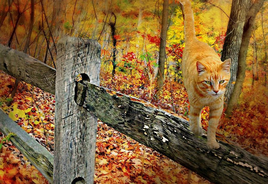 Camouflage Tabby by Diana Angstadt