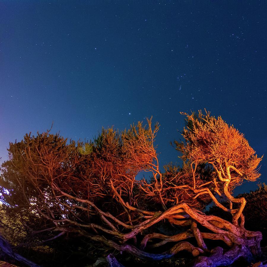 Campfire Glow - South Carlsbad Sb And Campground - California Photograph