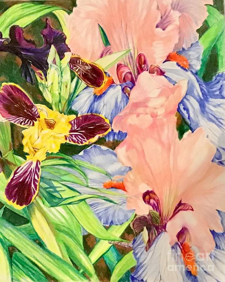 Can-can and bumblebee iris by Laurel Adams