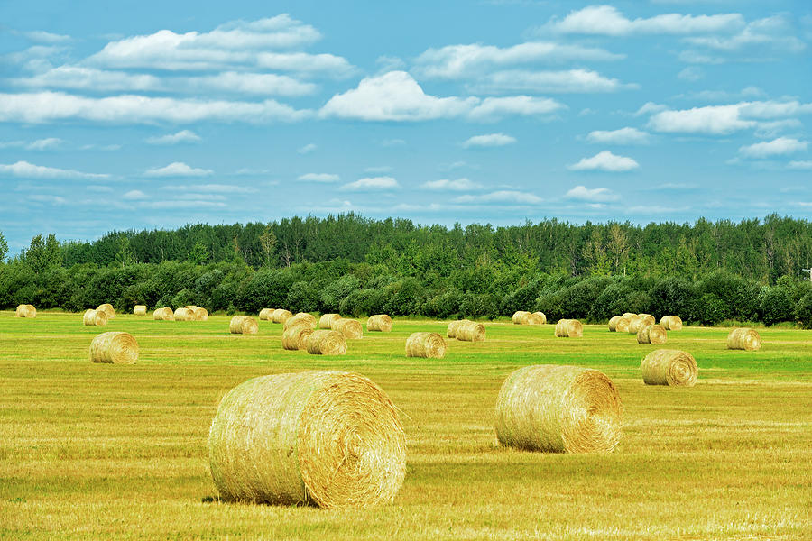 Agribusiness Photograph - Canada, Alberta, Joussard by Jaynes Gallery